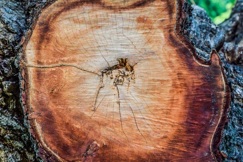 Superfície de madeira da árvore da interrupção, textura abstrata da quebra de madeira da textura da madeira velha, furo no meio d foto de stock