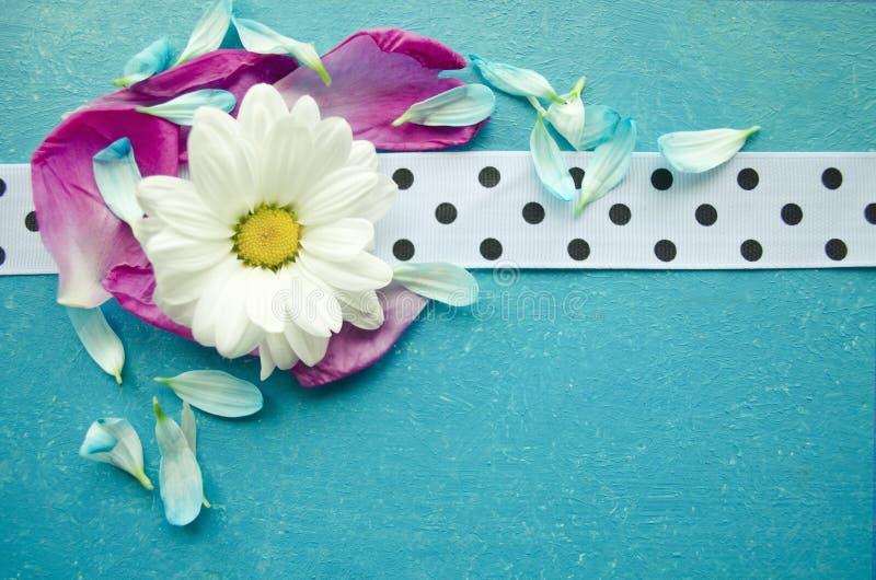 A superfície de madeira de turquesa com camomila, as pétalas coloridas da flor e o branco manchou a fita foto de stock royalty free
