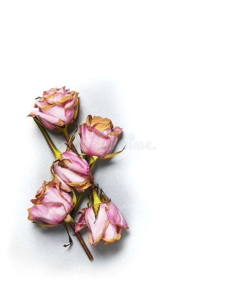 Superfície de metal da prata da lembrança da flor de Rosa foto de stock