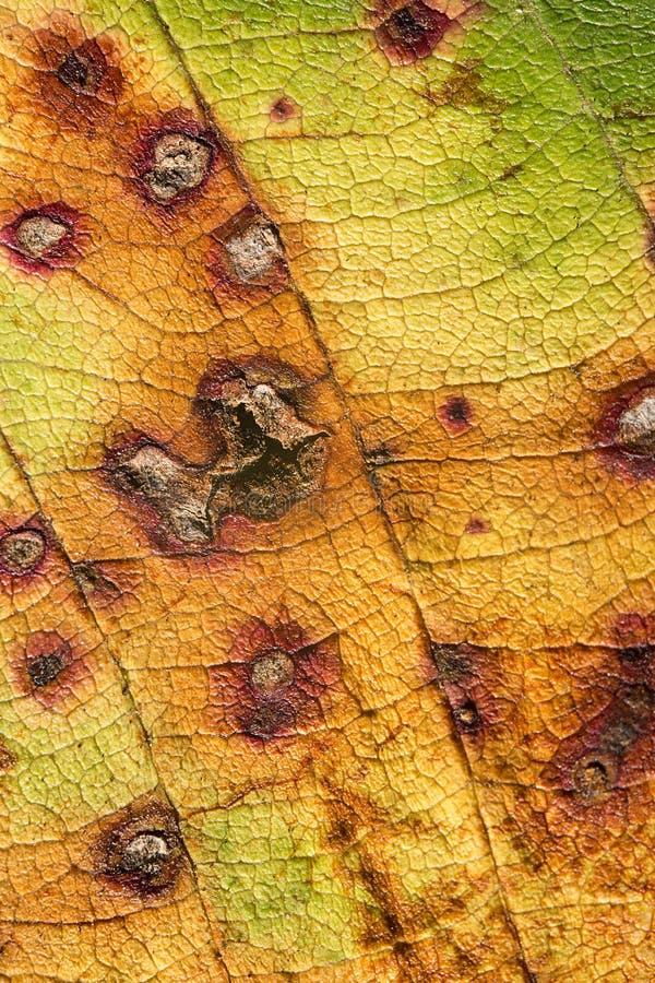 Superfície de uma folha do outono foto de stock