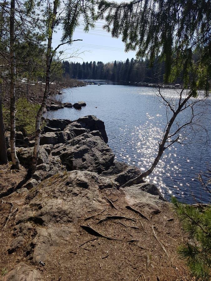 A superfície do lago da floresta brilha no sol fotografia de stock