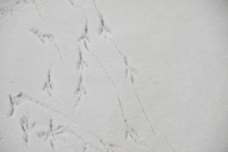 Superficie áspera de la nieve con las sombras y los rastros de los pájaros Textura de tierra del invierno con huellas Fondo blanc fotos de archivo