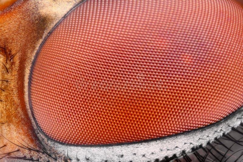 Superficie aguda y detallada extrema del ojo compuesto de la mosca en la ampliación extrema tomada con objetivo del microscopio fotos de archivo