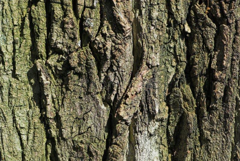 Superficie de la corteza de árbol imagen de archivo