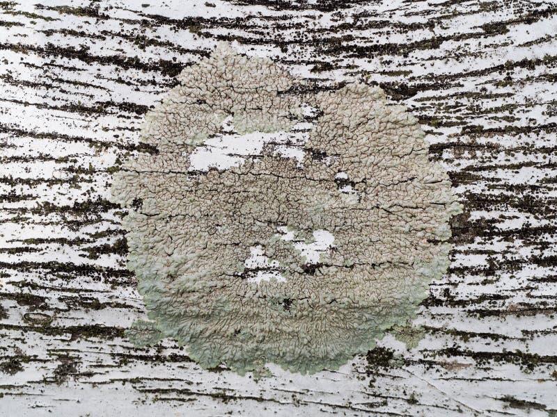 Superficie de la madera dura con el agujero fotos de archivo