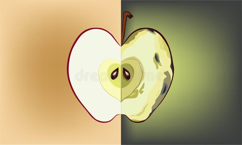 Superficie de la manzana cuando el tiempo cambia libre illustration