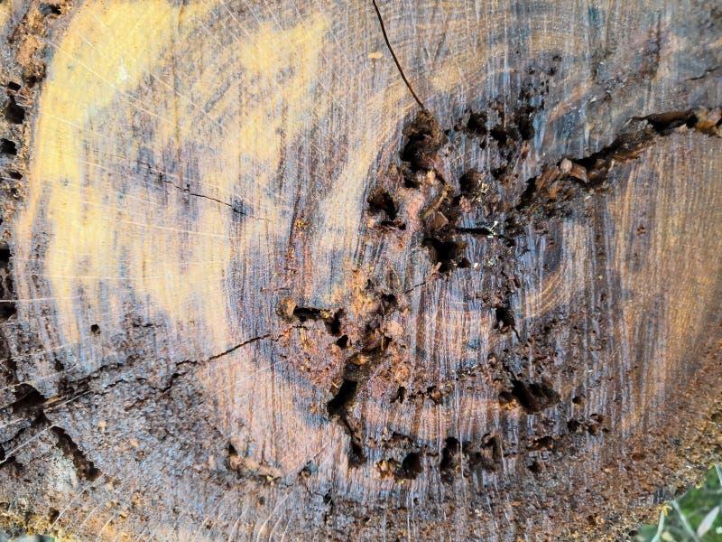 Superficie de madera del árbol del atajo, textura abstracta de la grieta de madera de la textura de la madera vieja foto de archivo libre de regalías