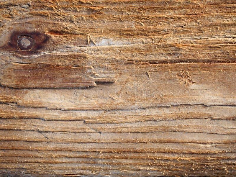 Superficie de madera del tablero erosionada por el fondo de la agua de mar, textura, palmadita fotografía de archivo