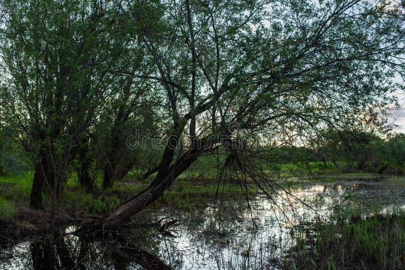 Superficie del lago foto de archivo