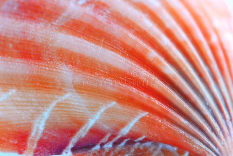 Superficie del Seashell fotografía de archivo libre de regalías