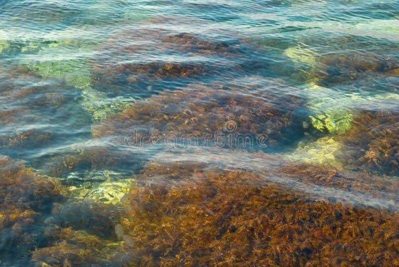 Superficie dell'acqua con driftweed. fotografia stock