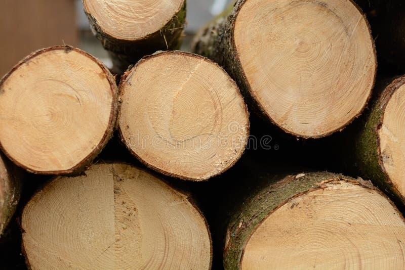 Superficie dell'intaglio in legno - anelli annuali fotografia stock