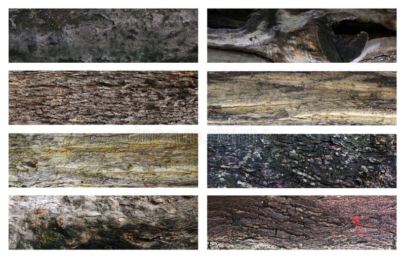 superficie della corteccia di à¸'tree fotografia stock libera da diritti