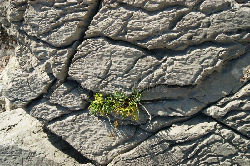 Superficie delle rocce del mare immagini stock