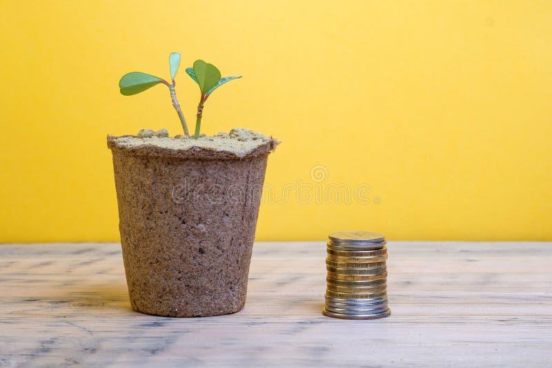 Superficie di legno su cui c'è un vaso con una pianta in vaso a destra della pila del vaso di soldi fotografia stock