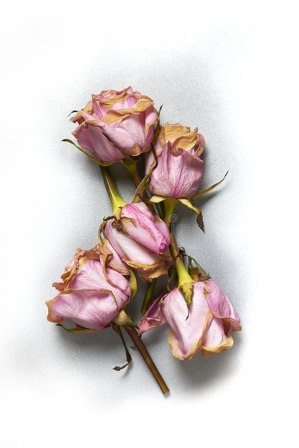 Superficie di metallo dell'argento del ricordo del fiore di Rosa fotografia stock