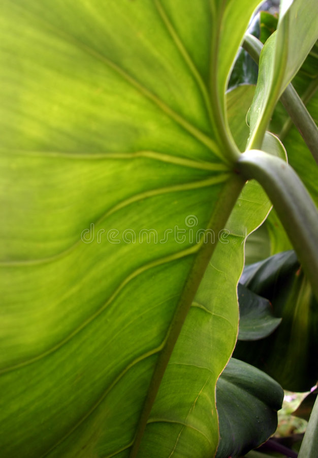 Superficie inferior tropical de la hoja fotografía de archivo libre de regalías