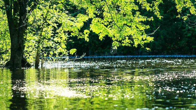 Superficie mágica del agua de un río en la puesta del sol, en un día de verano rodaballo fotografía de archivo