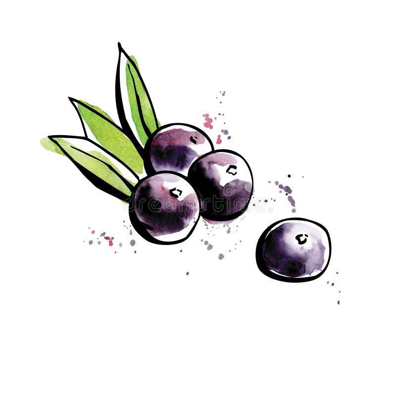 Superfood Acai berries stock illustration