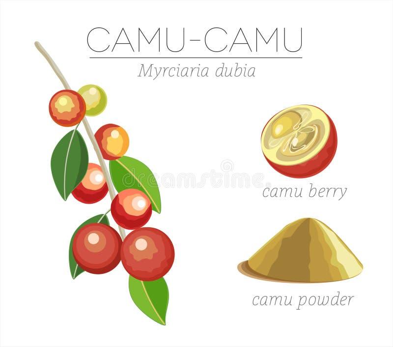 Superfood Camu иллюстрация вектора