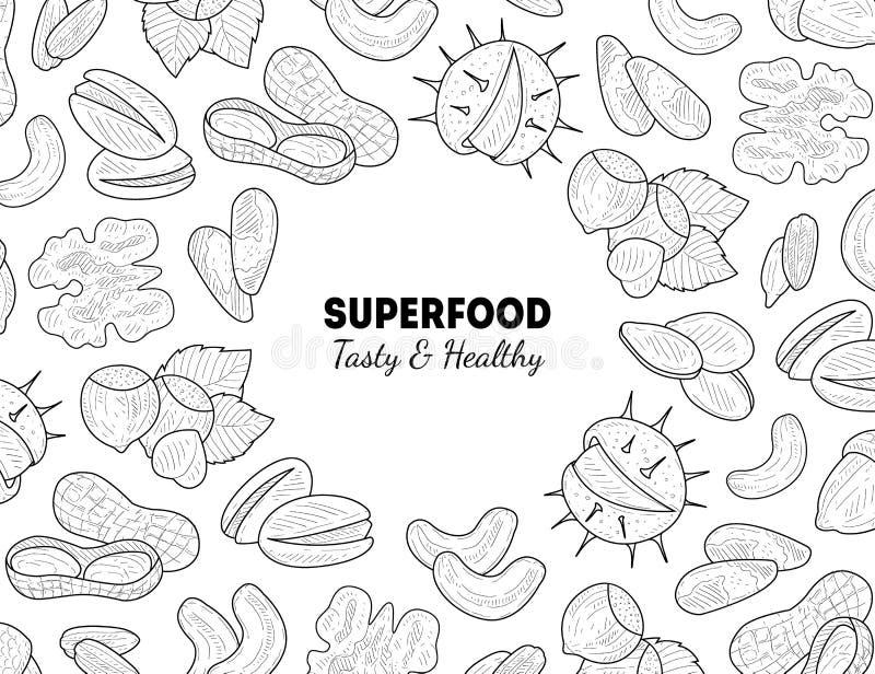 Superfood-Fahnen-Schablonen-, Nuss-und Samen-, geschmackvolle und gesundedes biologischen lebensmittels Handgezogene Vektor-Illus lizenzfreie abbildung