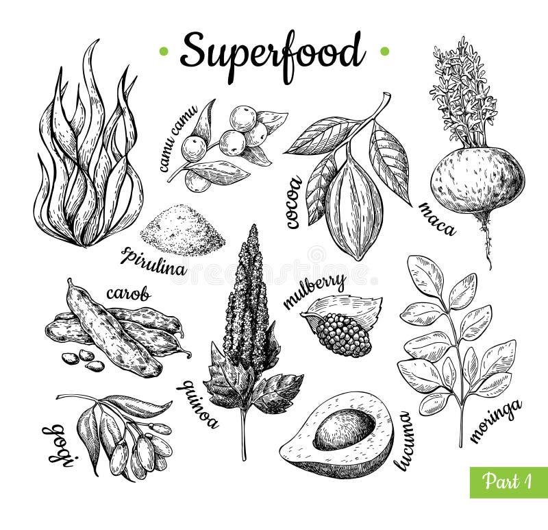Superfood hand dragen vektorillustration Botanisk isolerad ske royaltyfri illustrationer