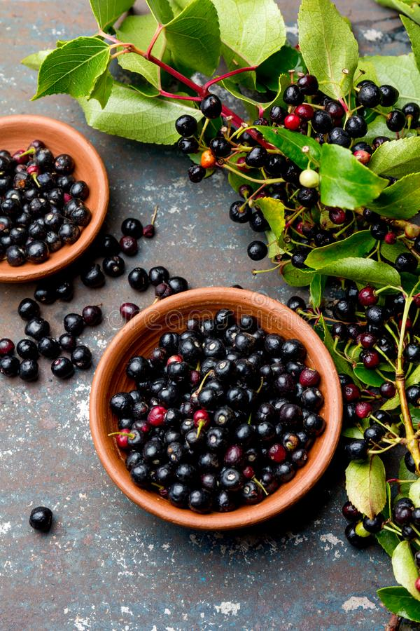 Superfood MAQUI BERRY. Superfoods antioxidant of indian mapuche, Chile. Bowl of fresh maqui berry and maqui berry tree stock photography