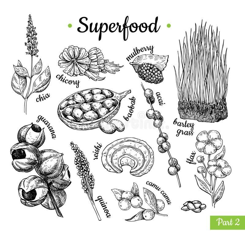 Superfood ręka rysująca wektorowa ilustracja Botaniczny odosobniony ske ilustracji