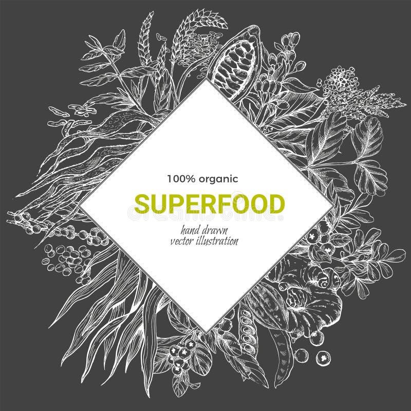 Superfood-Rautenfahne, realistisches Skizzenvektor iilutstration stock abbildung
