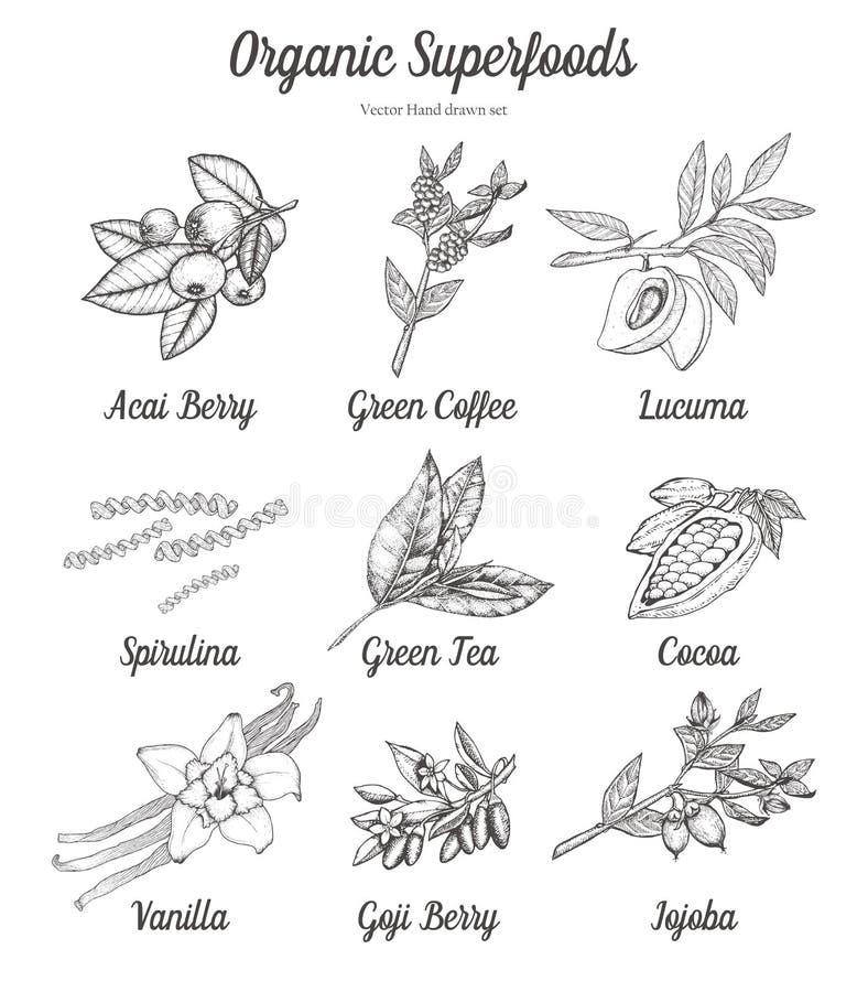 Superfood uppsättning av acaien, gojibär, grönt kaffe, te, kakao, kakao, spirulina, lucuma, vanilj, jojoba Naturligt organiskt fö royaltyfri foto