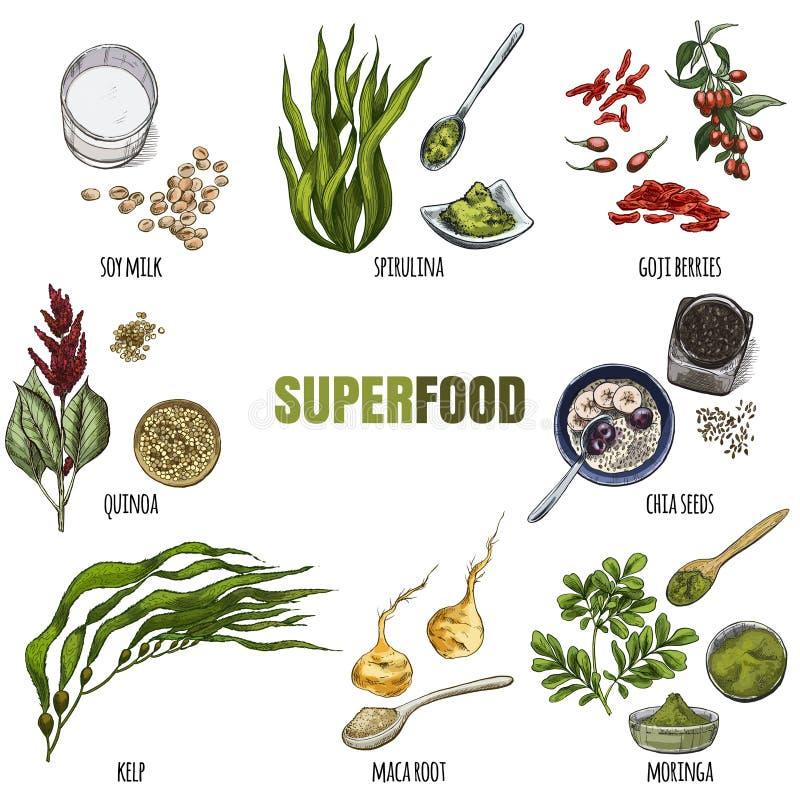 Superfood uppsättning Realistisk full färg skissar stock illustrationer