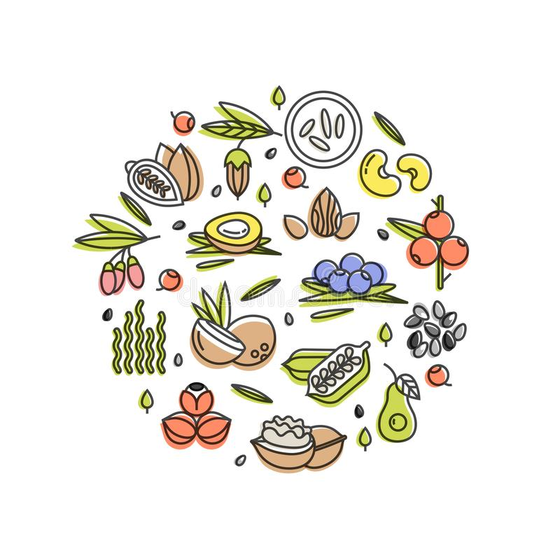 Superfood vector concept. Berries,nuts, vegetables fruits and seeds. Organic superfoods for health. Detox and weightloss. Superfood vector concept. Berries,nuts royalty free illustration