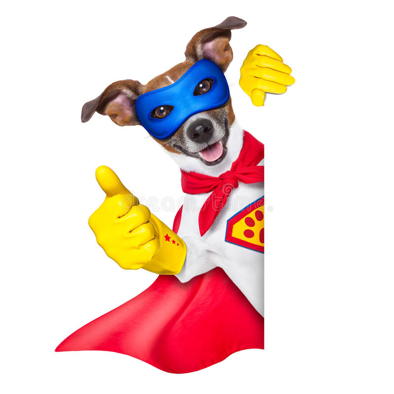 Superheldhund lizenzfreies stockbild