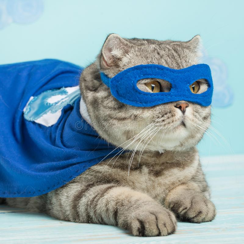 superhero cat, in a blue raincoat stock photo