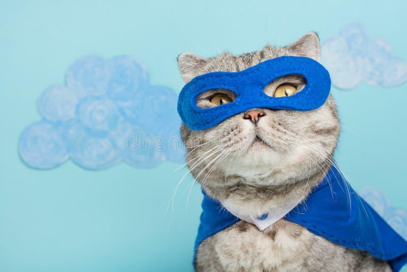 superhero cat, in a blue raincoat royalty free stock photos