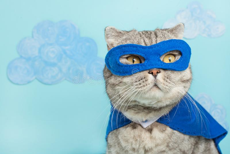 superhero cat, Scottish Whiskas with a blue cloak and mask. The concept of a superhero, super cat, leader stock image