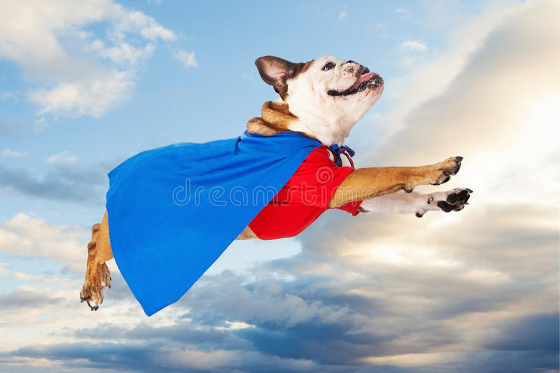 Service Dog Superhero Cartoon