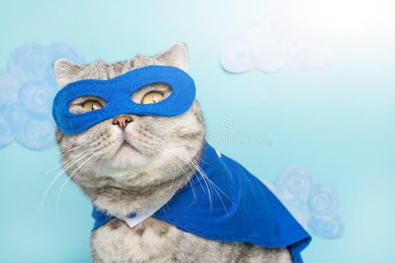 superherokat, Schotse Whiskas met een blauw mantel en een masker Het concept een superhero, super kat, leider royalty-vrije stock afbeelding