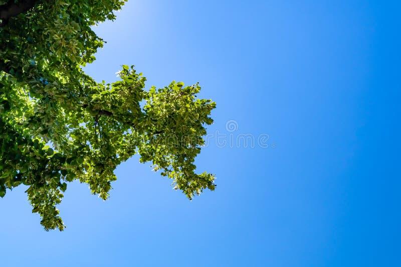 Download Superiore Verde Dell'albero Visto Da Sotto Con Cielo Blu Fotografia Stock - Immagine di nave, estate: 117978624
