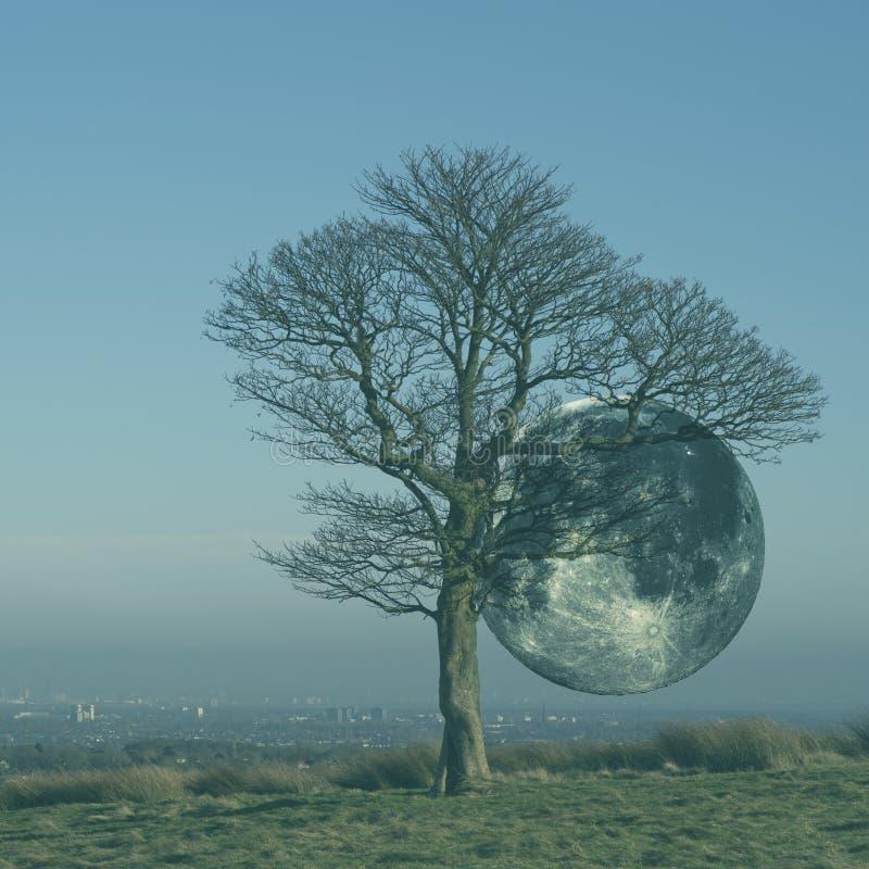 Supermoon πίσω από το μόνο δρύινο δέντρο στοκ φωτογραφίες με δικαίωμα ελεύθερης χρήσης