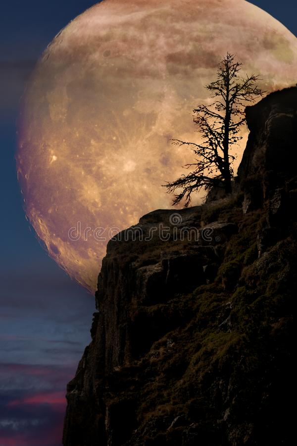 Supermoon with lone tree. On cliff edge royalty free stock photos
