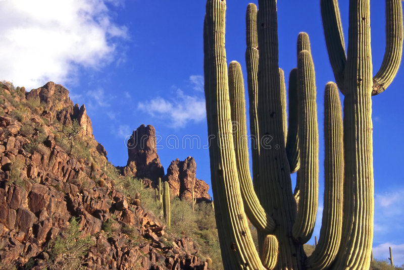 Superstition Mountains Cactus stock images