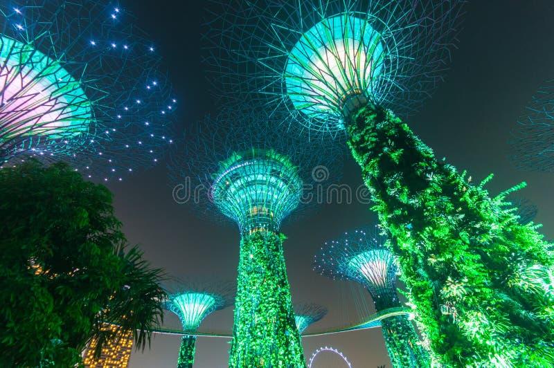 Supertree庭院在晚上,新加坡 免版税库存图片
