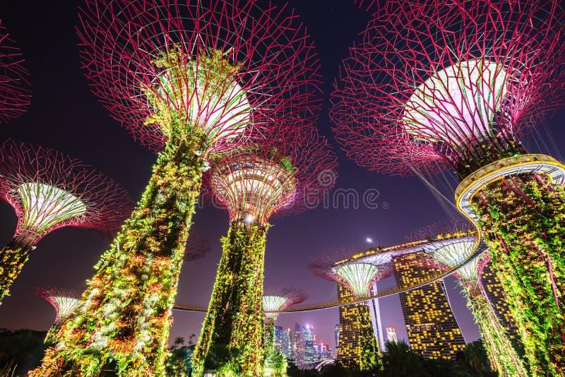 Supertree树丛的夜视图庭院的临近小游艇船坞海湾,新加坡 免版税图库摄影