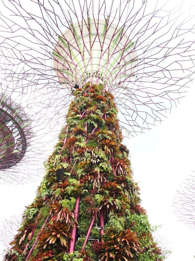 Supertree树丛 库存照片