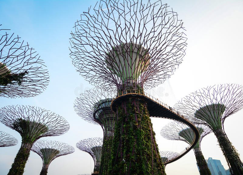 Supertree bij Tuinen door de Baai in Singapore stock foto
