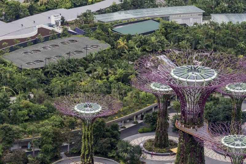 Supertree dunge på trädgårdar vid fjärden i Singapore arkivbild