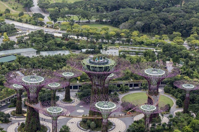 Supertree dunge på trädgårdar vid fjärden i Singapore royaltyfri fotografi