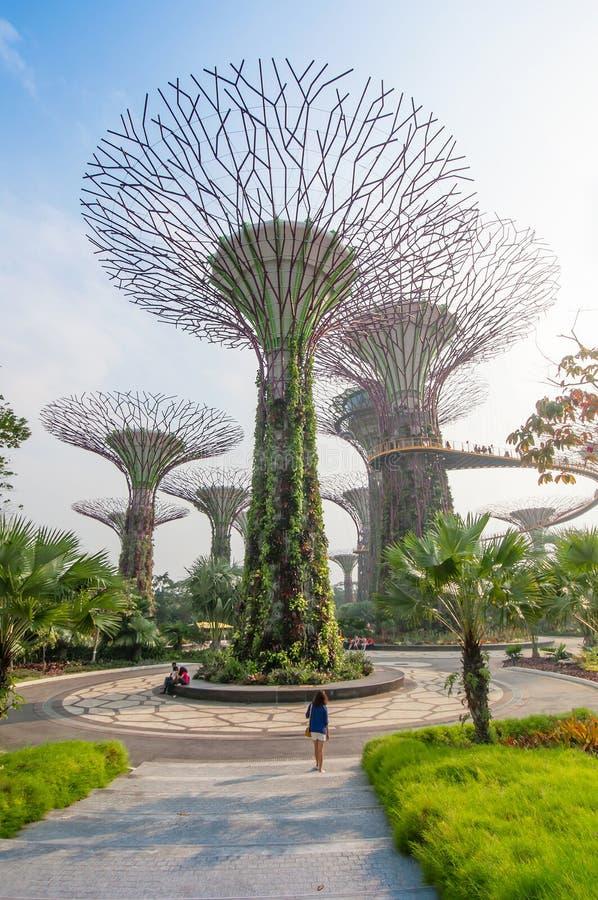 Supertree em jardins pela baía fotos de stock