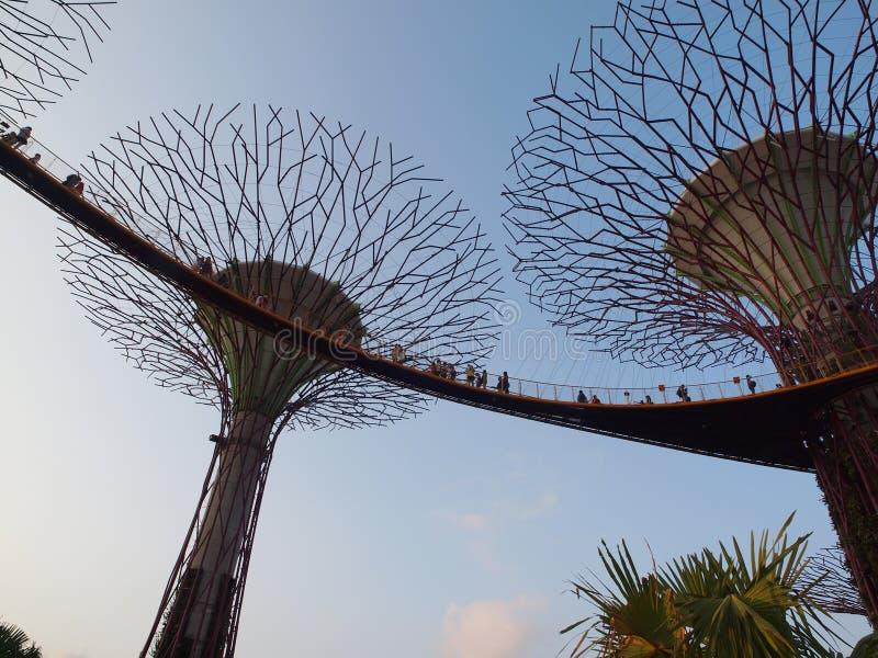 Supertree-Gärten durch den Schacht, Singapur lizenzfreie stockfotos